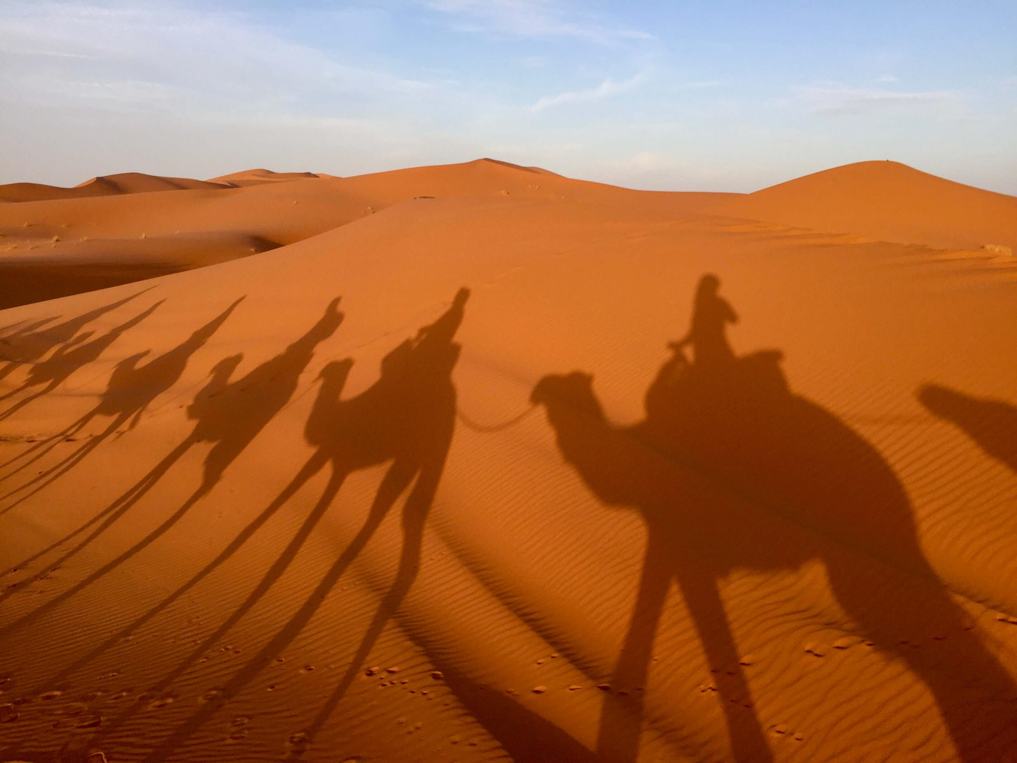 camel shadows Merzouga