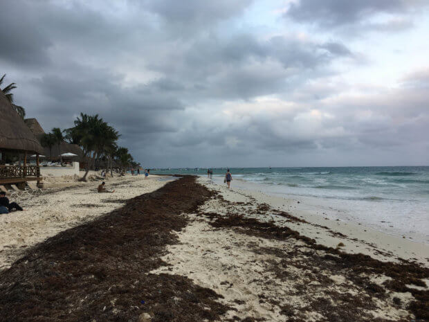 the beach near 34th street in Playa del Carmen