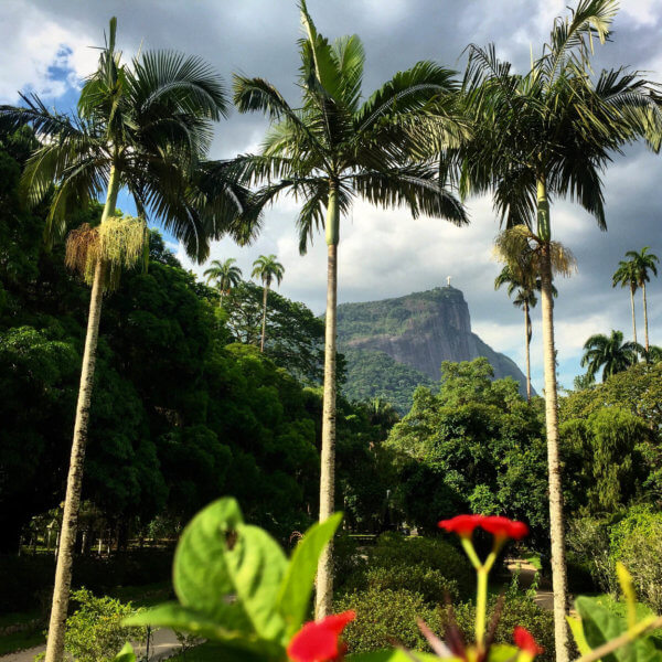 view of palms and Corcovado Mountain in distance at Jardim Botânico