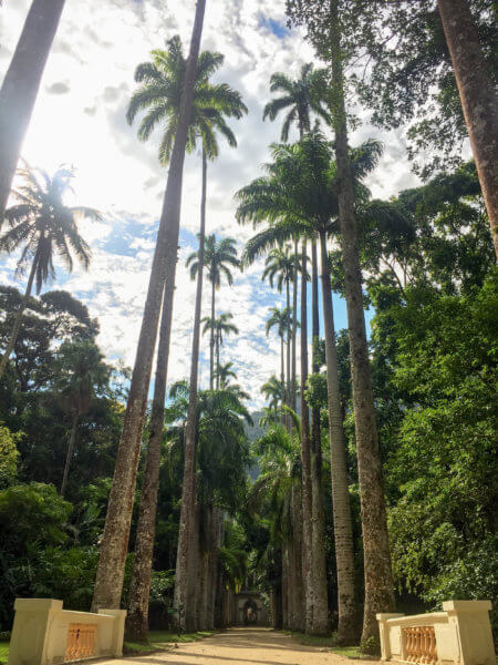 row of giant palm trees in the Jardim Botânico in Rio