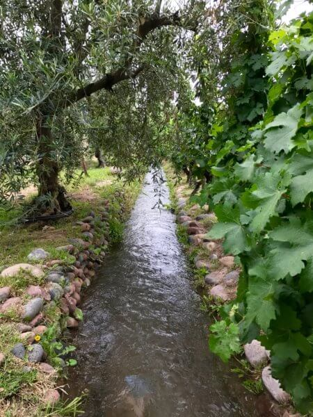 irrigation canal running through a winery in Mendoza, Argentina